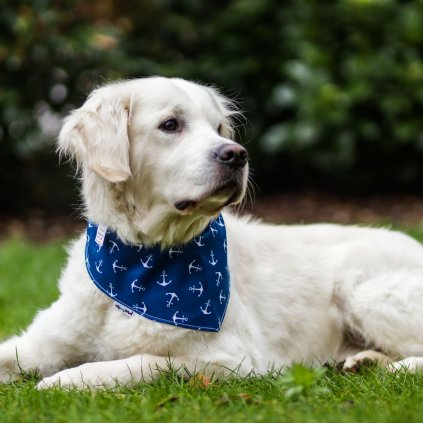 Satek pro psy namornicky (2)