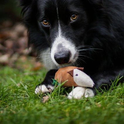 Hracky pro psy myska (2)