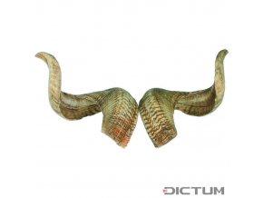 17942 dictum 831059 rams horn pair