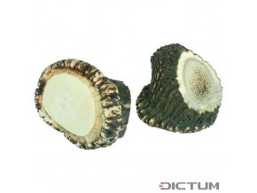 17945 dictum 831060 stag horn crown piece