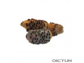 17963 dictum 831101 banksia cones size 1 400 650 g
