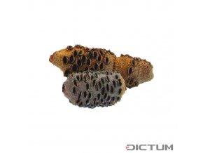 17981 dictum 831111 banksia cones size 2 651 1000 g