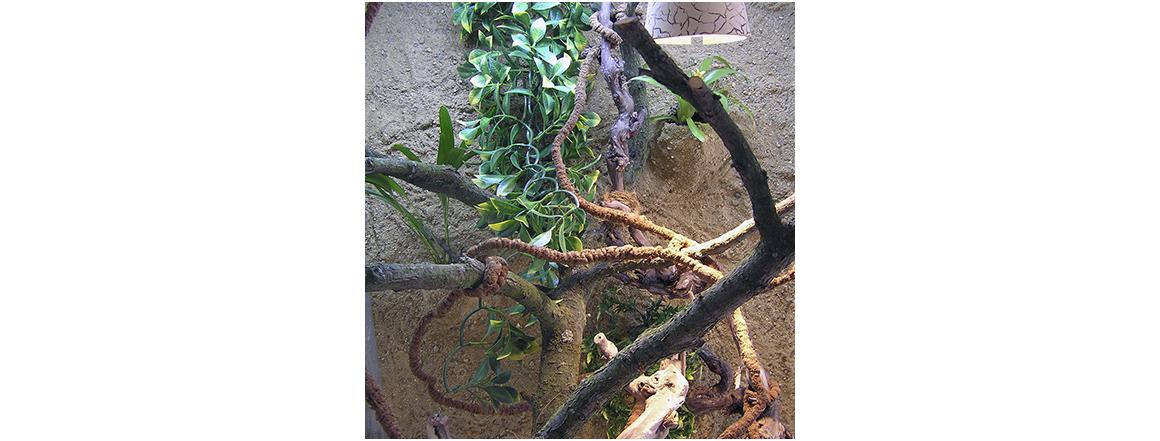 Terárium pro Chameleona - chovatelskepotreby.eu