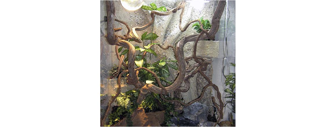 Terárium chameleon s pozadím - chovatelské potřeby - zverimex