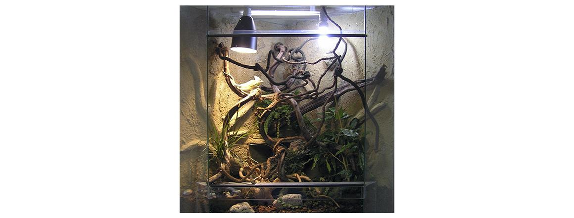 Terárium pro chameleona vybavené - chovatelské potřeby