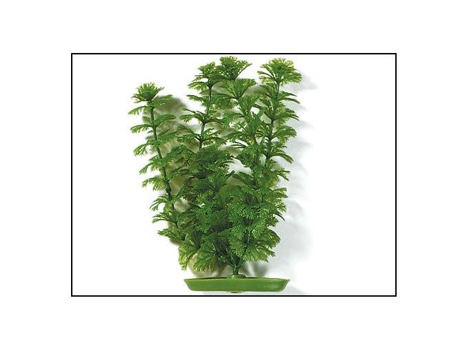 Rostlina Ambulia 12,5 cm