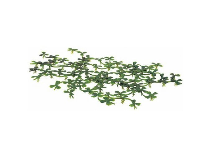 Plovoucí rostlina Duck weed