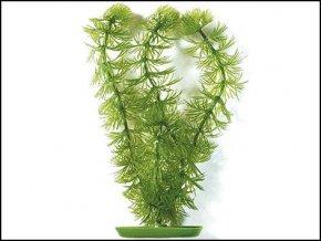 Rostlina Hornwort 12,5 cm