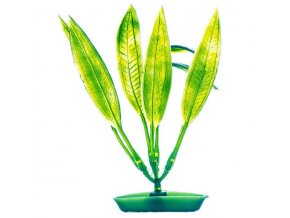 Rostlina Amazon Sword Plant 12,5cm
