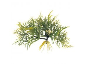 Plovoucí rostlina Fanwort