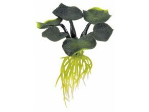 Plovoucí rostlina Water Hyacinth