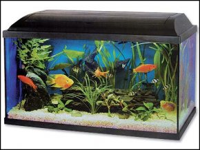 kompletní akvárium 54 litrů