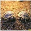 Terarijní substrát pro želvy