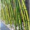 bambusové tyče jako dekorace