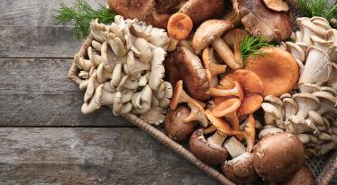 Jak nejlépe zpracovat houby