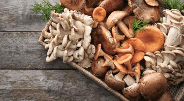 Léčivé houby: jak nám pomáhají a s čím je připravit?
