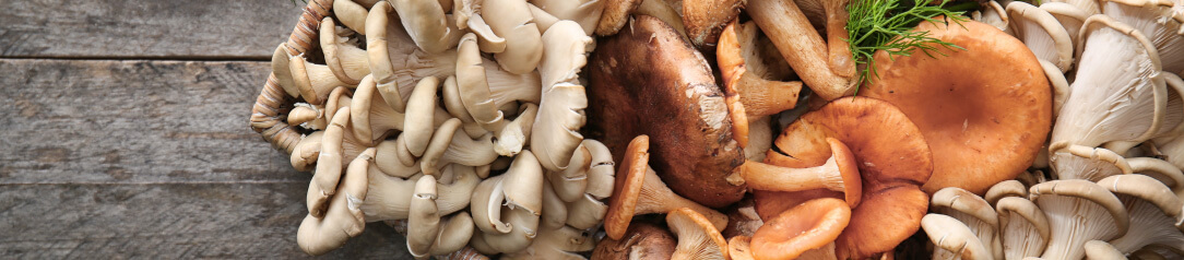 houby-uvod