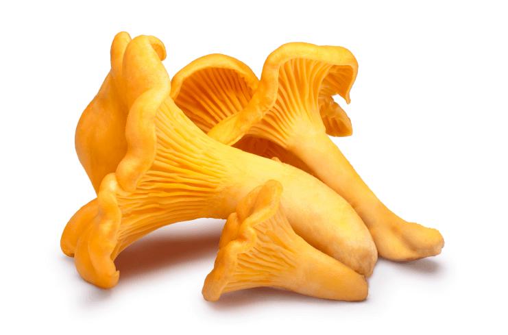 lecive-houby-lisky