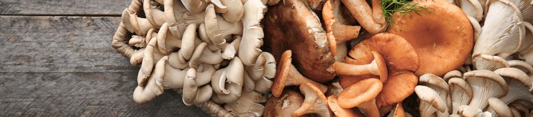 lecive-houby-uvod