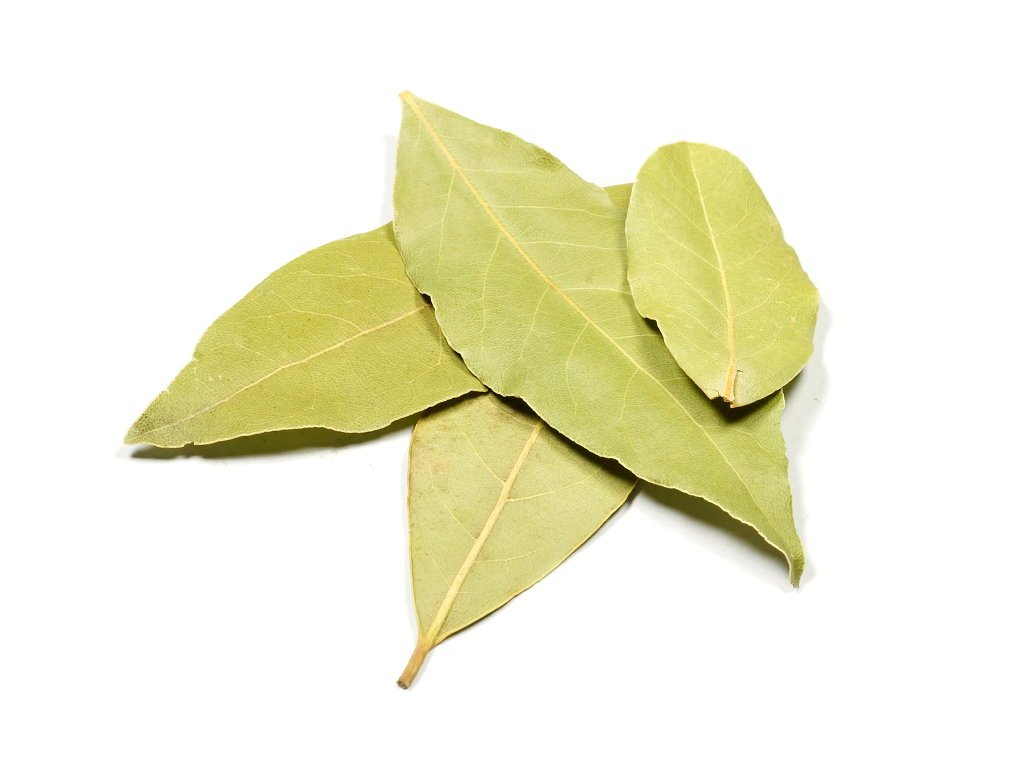bobkovy list
