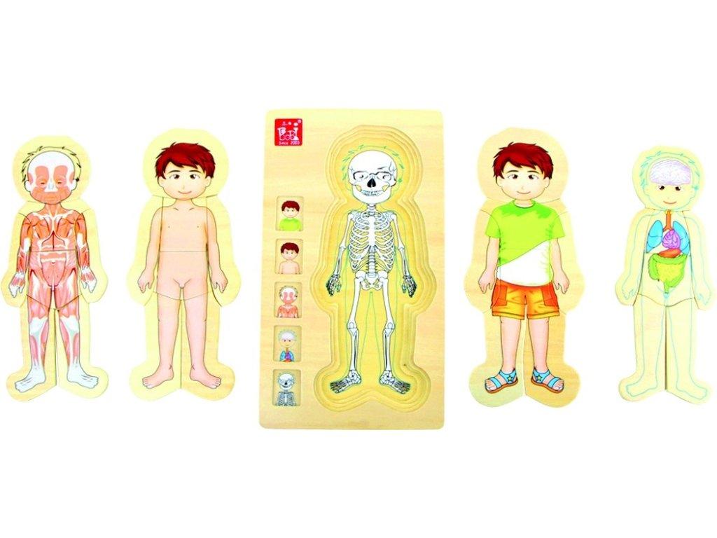 6415 anatomie kluk drevene puzzle 5 vrstev 17 x 29 x 2 cm