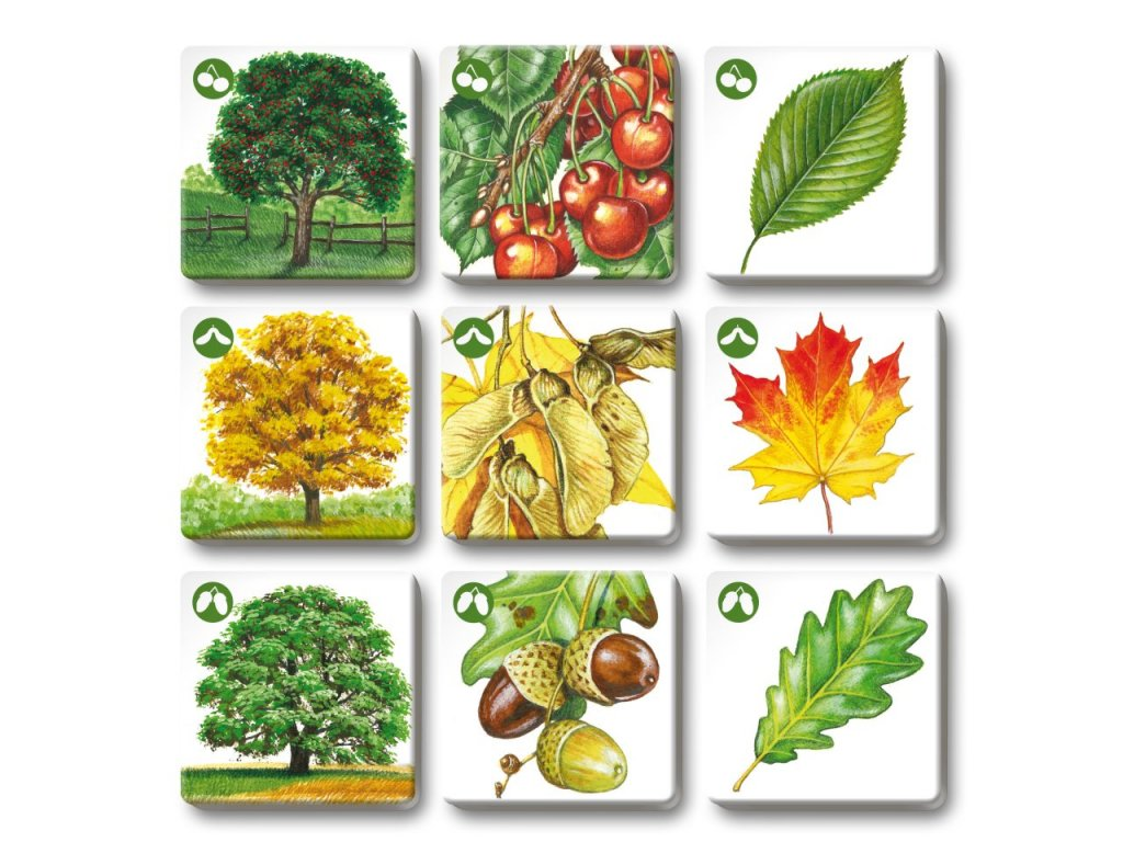 6496 pexetrio znas nase stromy