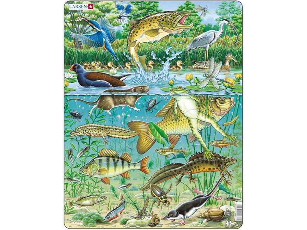 6538 zivot v nasem rybnice puzzle 50 dilku