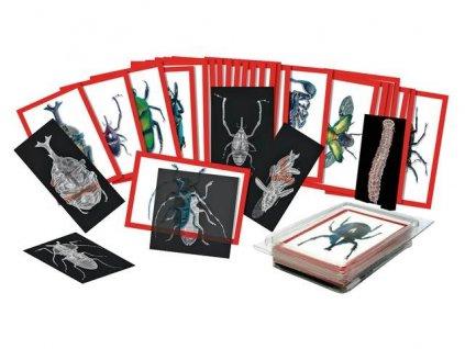 8940 rentgenove snimky hmyzu 36 oboustrannych obrazku hmyzu a 36 rentgenovych snimku