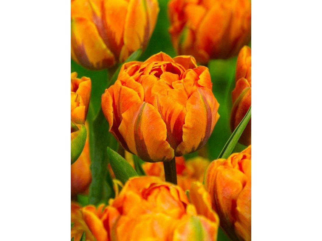 OrangePrincess1