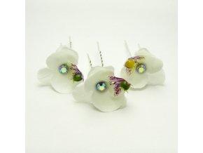 BVV0057 vlasenka bila orchidej