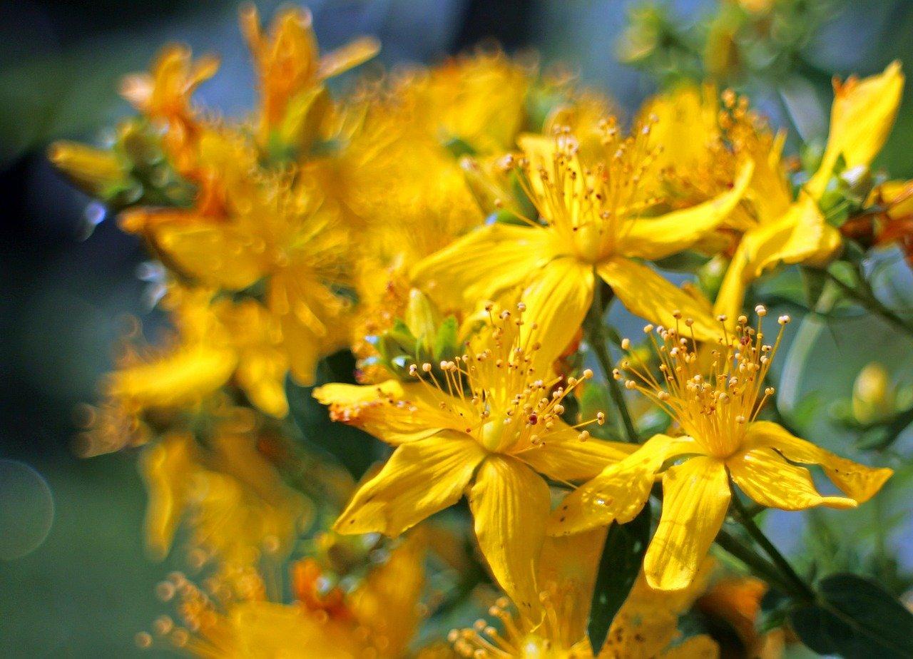 blossom-374510_1280