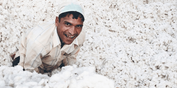 pestovani-organicke-bavlny