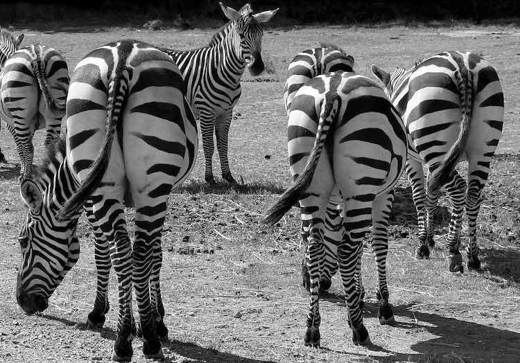 pruhy-zebry-blog-min