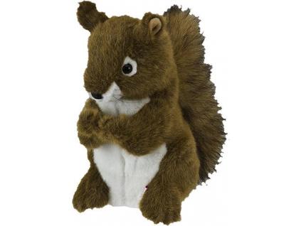phoca thumb l Squirrel