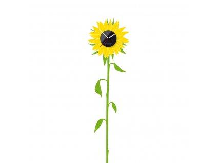 sunflower 1200