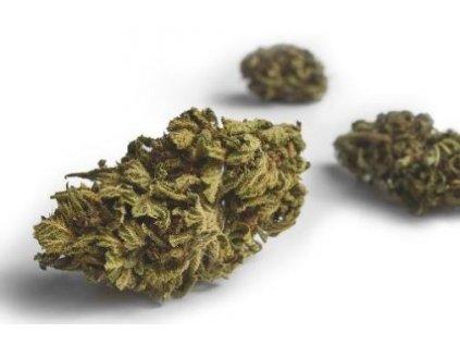 CBD konopné květy Jack Kush, 1 g