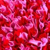 cmuchaci koberecek cerveno ruzovy 2