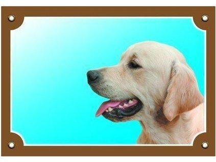 Barevná cedulka Pozor pes, Zlatý retriever