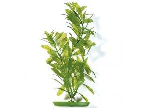 Rostlina MARINA Hygrophila 30 cm
