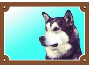 Barevná cedulka Pozor pes, Malamut