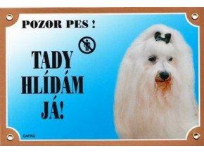 Barevná cedulka Pozor pes, Maltézský pinč