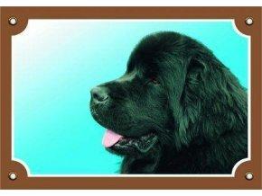 Barevná cedulka Pozor pes, Novofundlanský pes černý
