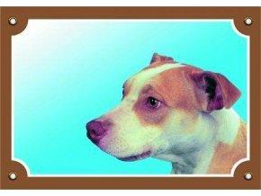 Barevná cedulka Pozor pes, Pitbullterier
