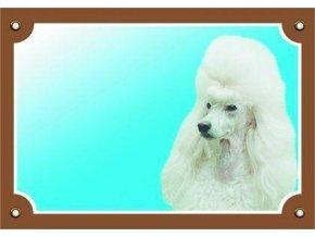 Barevná cedulka Pozor pes, Pudl světlý