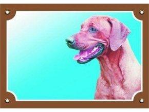 Barevná cedulka Pozor pes, Rhodéský ridgeback