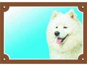 Barevná cedulka Pozor pes, Samojed