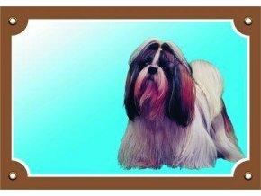 Barevná cedulka Pozor pes, Shi - tzu