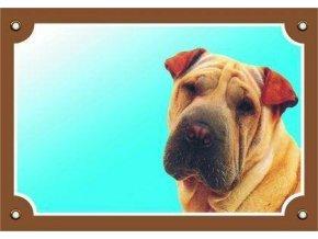 Barevná cedulka Pozor pes, Šarpei