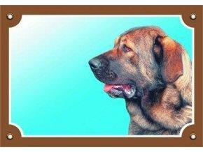 Barevná cedulka Pozor pes, Španělský mastin