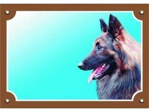 Barevná cedulka Pozor pes, Tervueren